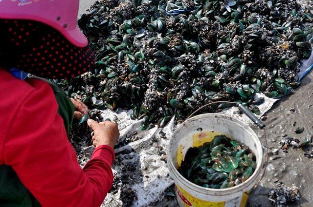 Nhặt đặc sản vẹm xanh trên biển, ngư dân thu tiền triệu mỗi giờ - 11
