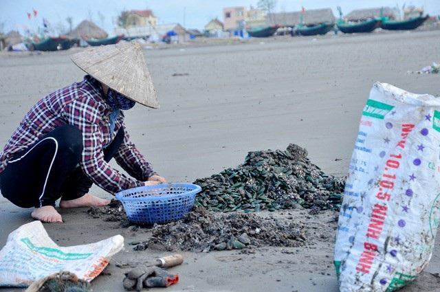 Nhặt đặc sản vẹm xanh trên biển, ngư dân thu tiền triệu mỗi giờ - 12