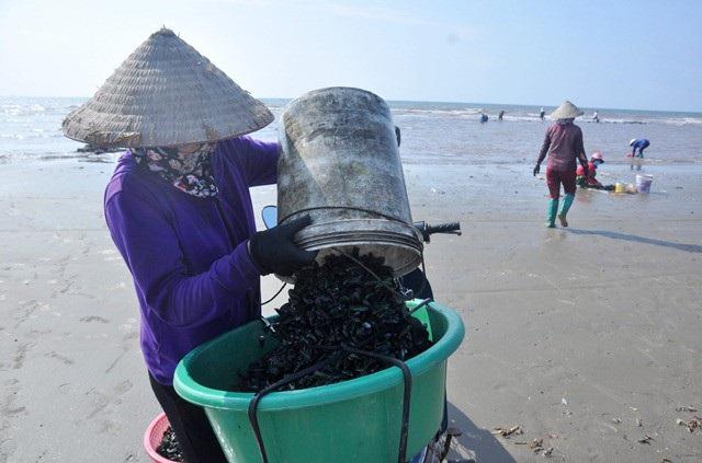 Nhặt đặc sản vẹm xanh trên biển, ngư dân thu tiền triệu mỗi giờ - 14
