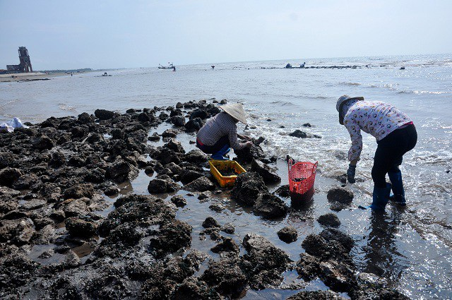 Nhặt đặc sản vẹm xanh trên biển, ngư dân thu tiền triệu mỗi giờ - 2