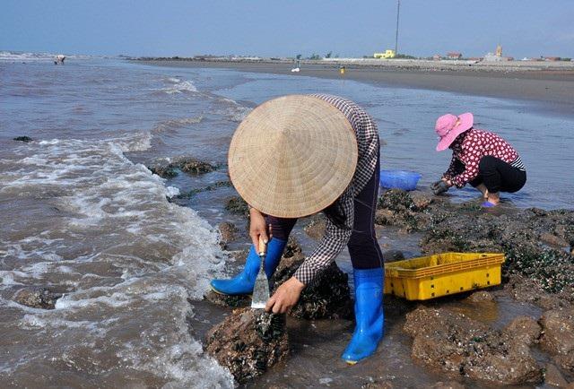 Nhặt đặc sản vẹm xanh trên biển, ngư dân thu tiền triệu mỗi giờ - 3