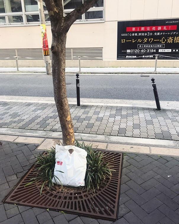 Hình ảnh được chia sẻ của một người dân tại Osaka: Tôi làm rơi túi đồ sau khi mua sắm ở trên đường và khi quay lại để tìm, tôi thấy nó được đặt ngay ngắn bên cạnh gốc cây và hoàn toàn nguyên vẹn