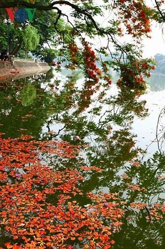 Hoa phượng thắp lửa bên Hồ Gươm - 11