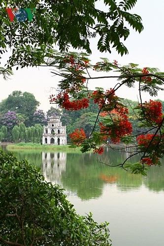Hoa phượng thắp lửa bên Hồ Gươm - 4