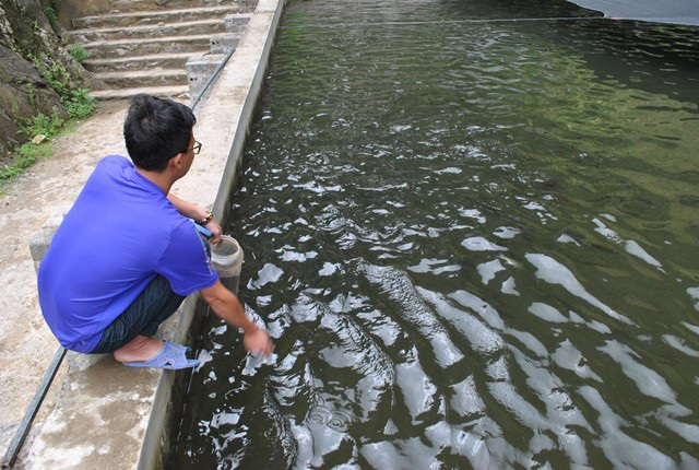 Theo nhu cầu của thị trường, hiện nay trại cá hồi, cá tầm của Nguyễn Như Quỳnh chỉ tập trung nuôi giống cá hồi Phần Lan.