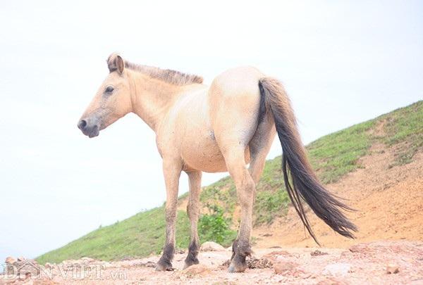 """""""Vương quốc"""" bạch mã lớn nhất đất Việt: Nuôi ngựa trắng lên đời đại gia - 11"""