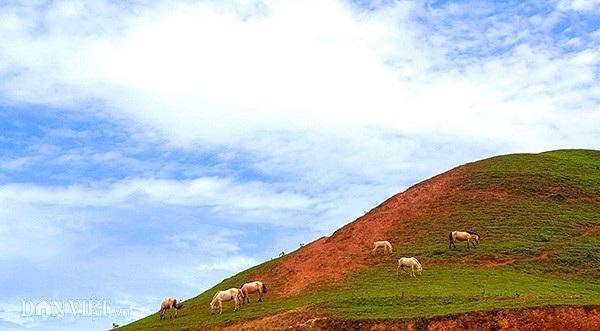 """""""Vương quốc"""" bạch mã lớn nhất đất Việt: Nuôi ngựa trắng lên đời đại gia - 12"""