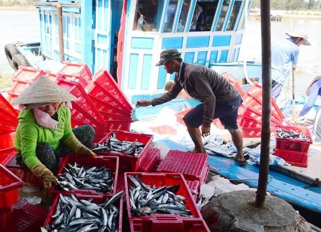 Giá cá nục dao động từ 33.000 - 35.000 đồng/kg. Ảnh: C.X