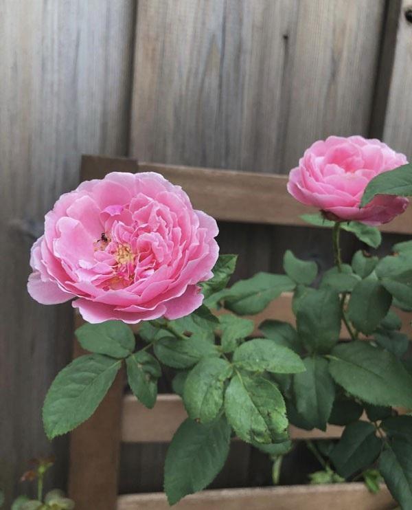 Những sắc hoa rực rỡ trong khu vườn.