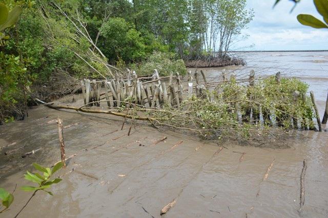 Đê biển Tây ở Cà Mau sạt lở rất nghiêm trọng.
