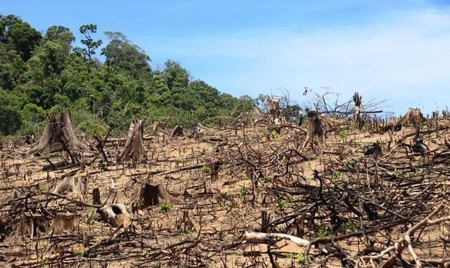 Hơn 64 ha rừng bị chặt phá tại xã An Hưng, huyện An Lão (tỉnh Bình Định).