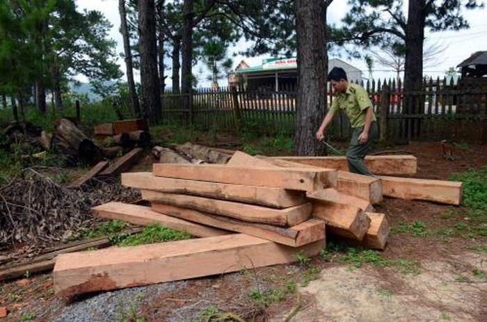 Nhiều diện tích rừng bị tàn phá trong khu vực thác lưu ly