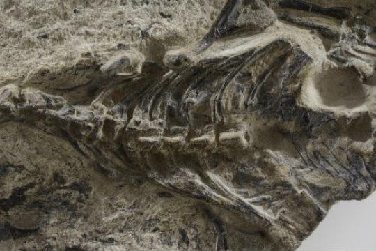 Phát hiện hóa thạch thằn lằn cổ nhất thế giới - 1