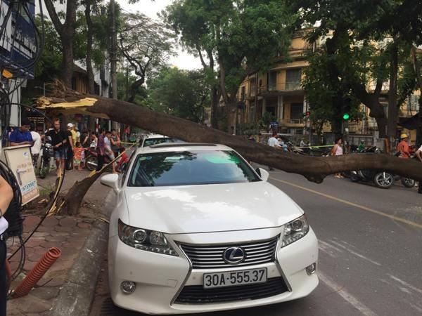 Theo quan sát phần gốc cây đã bị bật tung lên khỏi mặt đất.