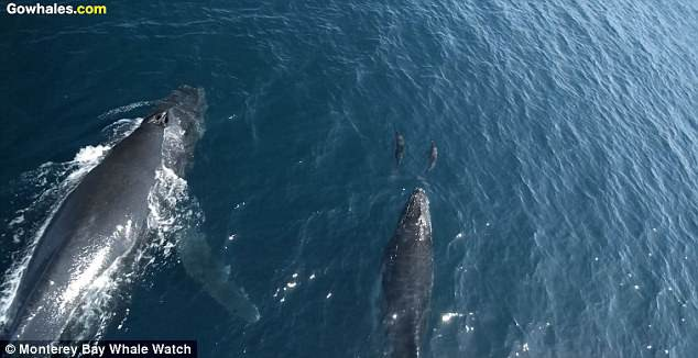 Đoạn clip được ghi lại trong một chuyến tàu đi ngắm cá voi vốn thường được tổ chức ở nơi đây.