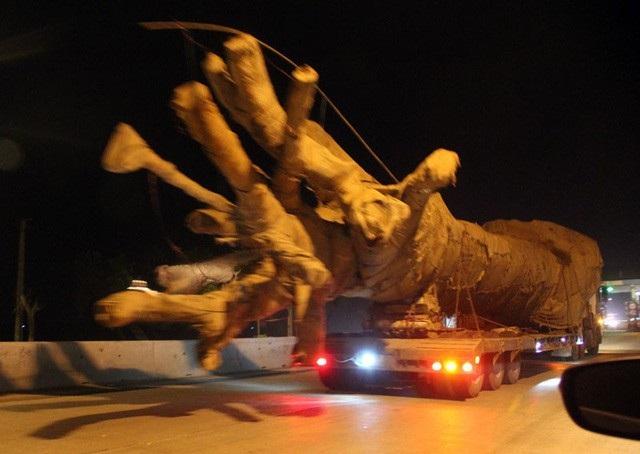 Chiếc xe chở cây khủng như quái thú băng băng trên quốc lộ 1A, đoạn qua địa phận tỉnh Hà Tĩnh hôm 26/3. (Ảnh: Văn Dũng)