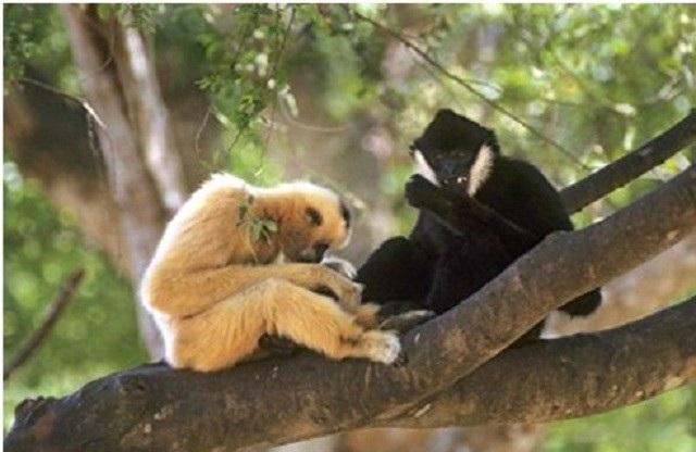 Tại VQG Phong Nha - Kẻ Bàng hiện có 1.394 loài động vật