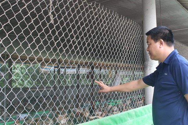 Anh Trần Kiên Cường giới thiệu trang trại 5.000 con gà Đông Tảo bố mẹ. Ảnh Thu Hường
