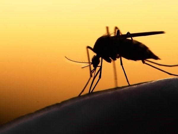 Những bệnh nguy hiểm do muỗi truyền - 1