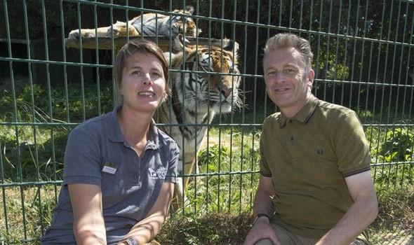 Charlotte Corney và Chris Packham cùng hai con hổ - Ảnh của Steve Reigate.