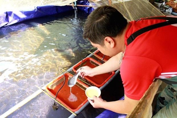 Anh Trần Thanh Hải chăm sóc cá Bỗng giống.