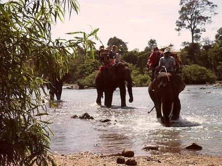 Loại hình du lịch cưỡi voi sẽ được thay thế bằng ngắm voi tại Vườn quốc gia Yok Đôn.