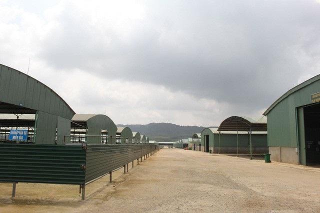 Dự án bò Bình Hà, được đánh giá là dự án nuôi bò lớn nhất miền Trung sau hơn 2 năm triển khai đã chết lâm sàng