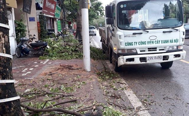 Phần còn lại cây sưa trên đường Phan Kế Bính bị chặt trộm vào ban đêm