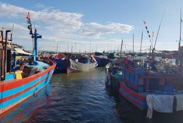 Mặc dù đang giữa mùa vụ đi biển nhưng hàng trăm tàu cá phải nằm bờ vì thiếu lao động đi biển