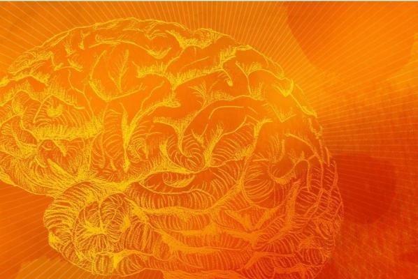 Tìm ra cách ngăn chặn lão hóa mạch não, cải thiện trí nhớ - 1