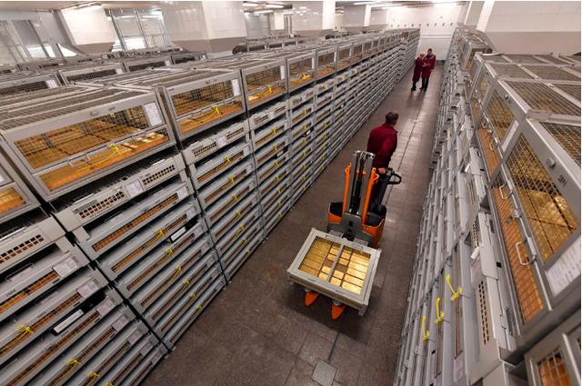 Các công nhân vận chuyển vàng bên trong kho dự trữ tại Nga (Ảnh: RBTH)