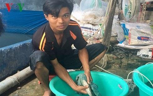 Anh Trần Thanh Hùng đang vuốt cá chạch lấu cái để lấy trứng chuẩn bị thụ tinh. (Ảnh: Tấn Phong).