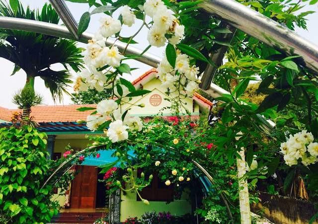 Vườn hoa 100 triệu đẹp như tranh của cô giáo dạy Toán - 6