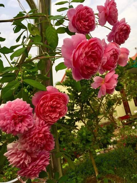 Vườn hoa 100 triệu đẹp như tranh của cô giáo dạy Toán - 8