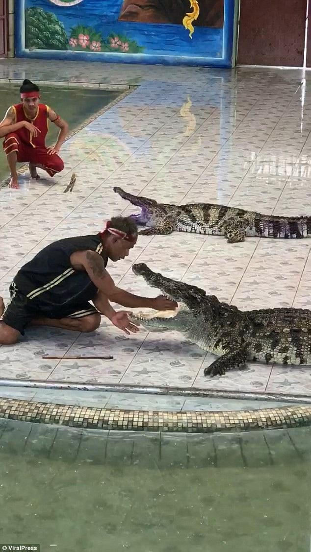 Huấn luyện viên Tao đã đưa tay vào miệng con cá sấu tại Thái Lan (Ảnh: ViralPress)