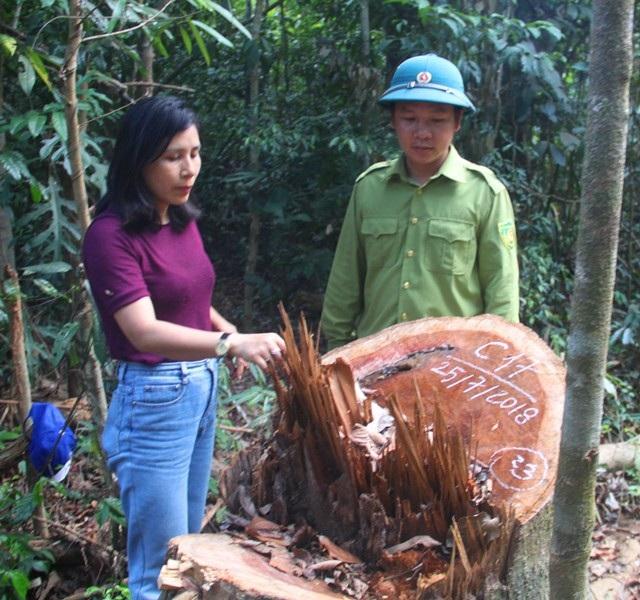 Nhiều cây gỗ có đường kính cả hơn 1 mét.