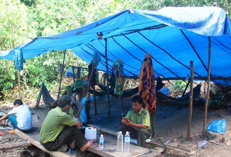 Hiện nay, Kiểm lâm huyện Vĩnh Thạnh đang cử cán bộ túc trực tại hiện trường.