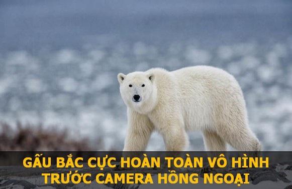Để giữ nhiệt, gấu Bắc Cực sở hữu một lớp mỡ và lông cực kỳ dày. Do đó, dù bên trong cơ thể ấm nóng, nhưng phía bề mặt lại có nhiệt độ gần tương đương với băng tuyết ở vùng cực. Chính vì vậy, loài động vật này hoàn toàn hòa lẫn với môi trường và không bị phát hiện bởi các thiết bị tầm nhiệt.