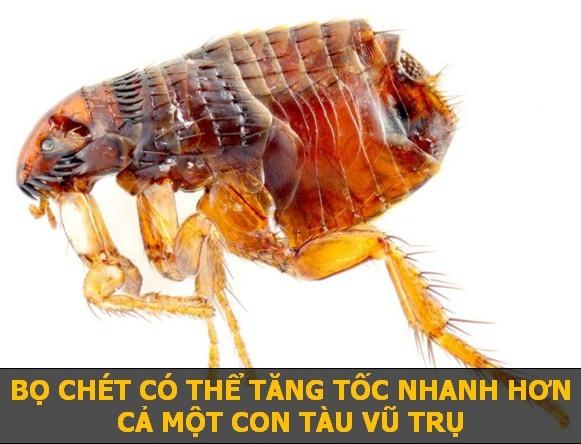 Khi thực hiện một cú bật nhảy, bọ chét có thể đạt độ cao 8 cm chỉ sau 0,001 giây. Gia tốc này thậm chí còn lớn gấp 50 lần các con tàu vũ trụ.
