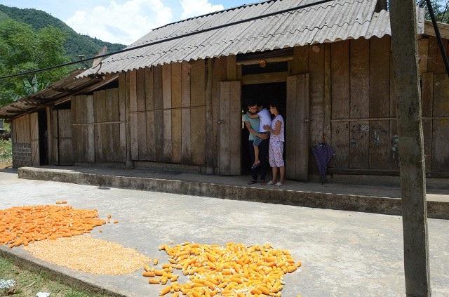 Không có tiền cho con đến viện, anh Cường đang tính bán cả số lương thực duy nhất nuôi sống cả nhà.