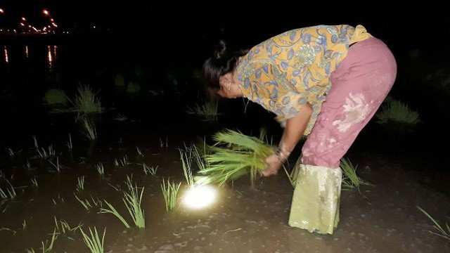 Thay vì làm việc vào ban ngày thì gần 1 tuần nay, nhiều người nông dân tại Hà Tĩnh lại tiến hành sản xuất vào ban đêm để tránh cái nắng cháy da cháy thịt. (Ảnh: Xuân Sinh)