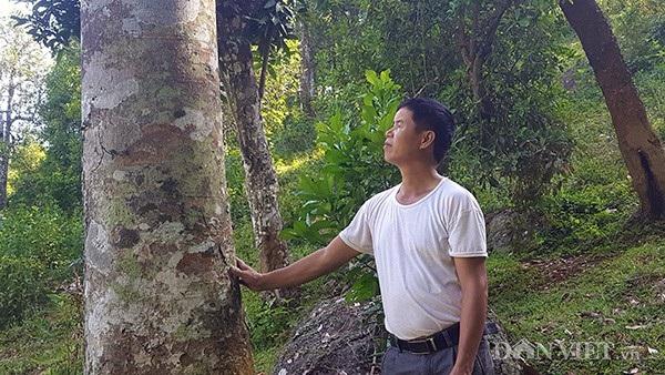 Chủ nhân của cây trám đặc biệt này chính là ông Hứa Văn Độ ở xóm Phai Kéo, bản Phai Lừa, xã Đồng Giáp, huyện Văn Quan (Lạng Sơn).