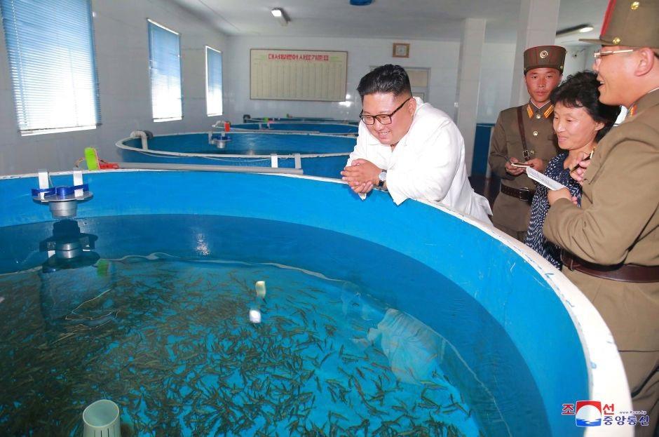 Ông Kim Jong-un tới thăm một trang trại nuôi cá.