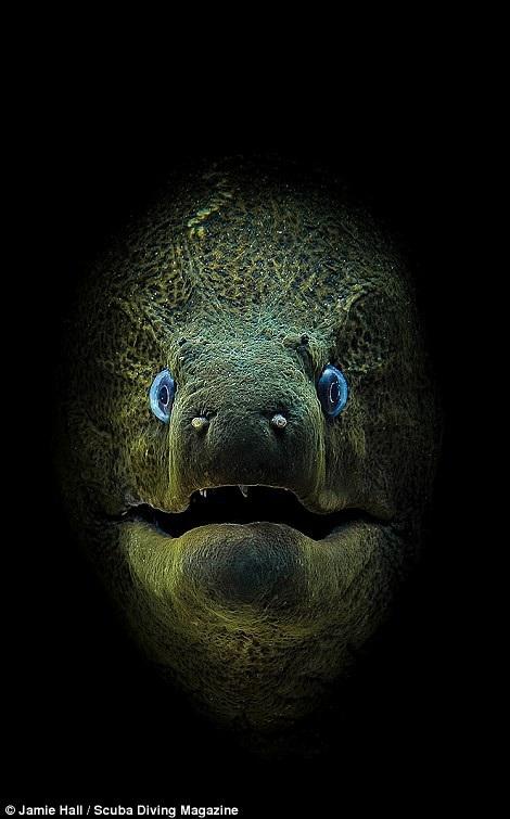 Thổi bay tâm trí với những bức ảnh chiến thắng trong cuộc thi ảnh dưới nước - 5
