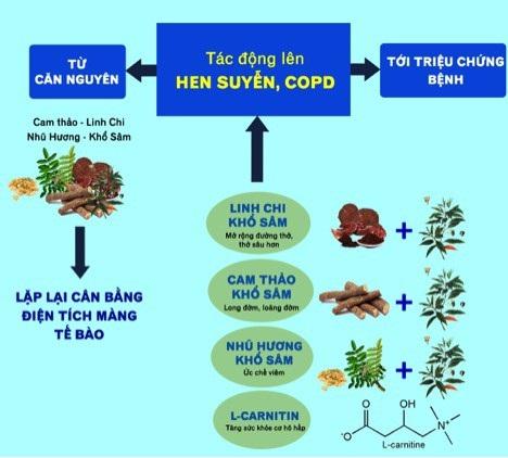 Công thức thảo dược tác động toàn diện lên bệnh hen suyễn, COPD