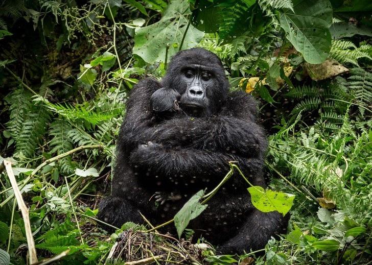 """Có một trái đất """"đa sắc thái"""" đến vậy trong cuộc thi ảnh của National Geographic! - Ảnh 2."""