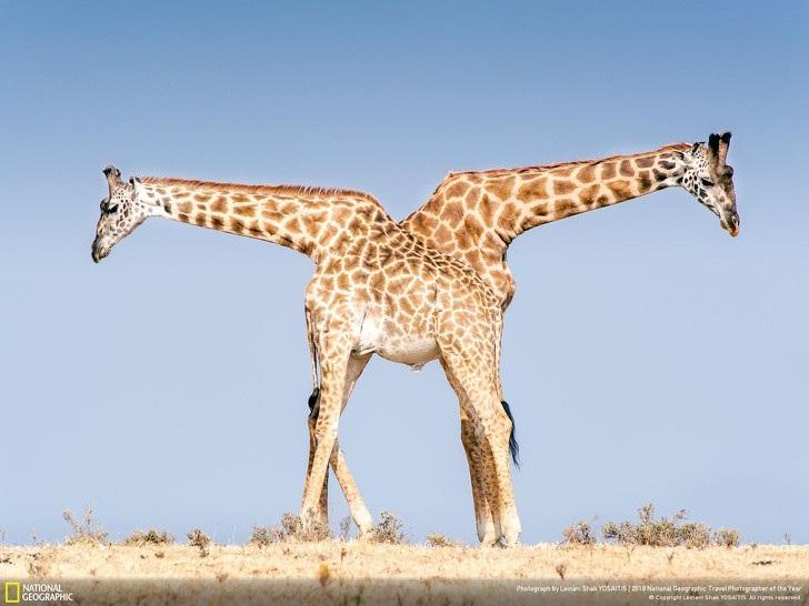 """Có một trái đất """"đa sắc thái"""" đến vậy trong cuộc thi ảnh của National Geographic! - Ảnh 13."""