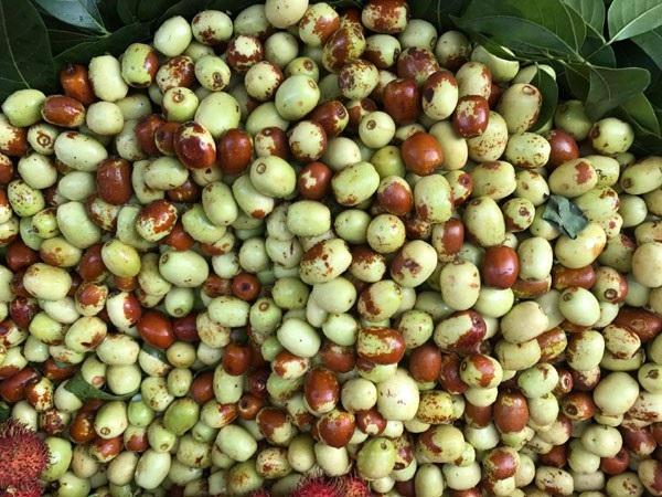 Dù được quảng cáo là loại quả ở các tỉnh phía Bắc ở Việt Nam tuy nhiên, táo tàu thực chất là loại quả được nhập từ Trung Quốc.