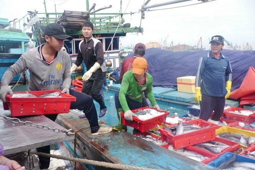 Sau những khóa học, ngư dân Bà Rịa - Vũng Tàu tự tin hơn để vươn khơi, bám biển.  Ảnh: P.T