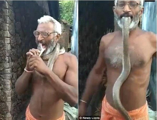 Ông Randhir Mahto ngậm đầu con rắn hổ mang vào miệng bất chấp việc nó cố gắng cắn vào mặt ông